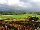 Paysage agricole guadeloupéen