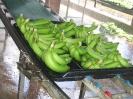 Filière Banane