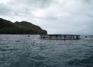 Cages flottantes