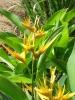 Filière Horticulture