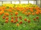Fleurs ornementales