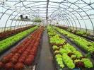 Filières Végétales