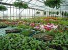 Culture de fleurs ornementales